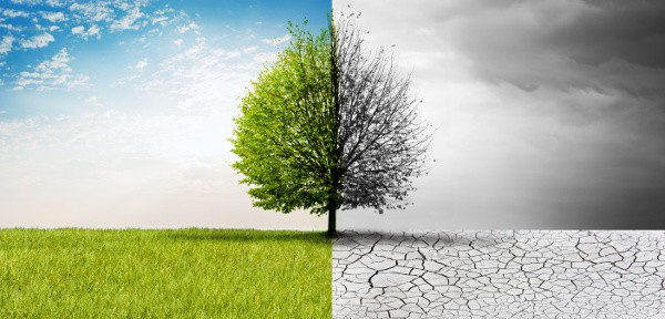 bleak versus vibrant landscape
